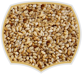 Sesame seeds for food industry, Gama Food
