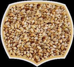 Сусамено семе, търговия на едро. Gama Food