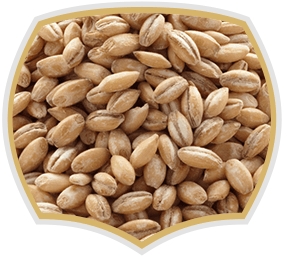 Barley seeds, wholesale. Gama Food