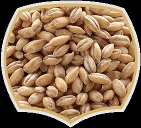 Ечемик, семена за хранителната промишленост. Gama Food