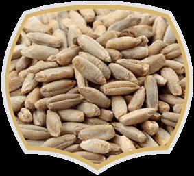 Ръж, семена на едро. Gama Food