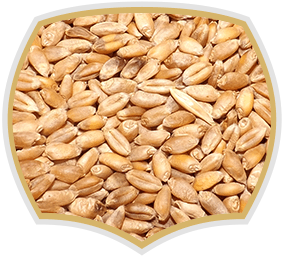 Wheat seeds for muesli, Gama Food