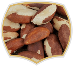 Brazil nut, raw nuts from Gama Food